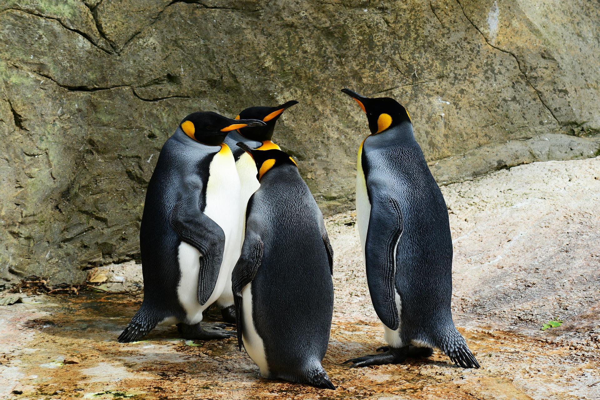 Pingvini Zoo Zagreb