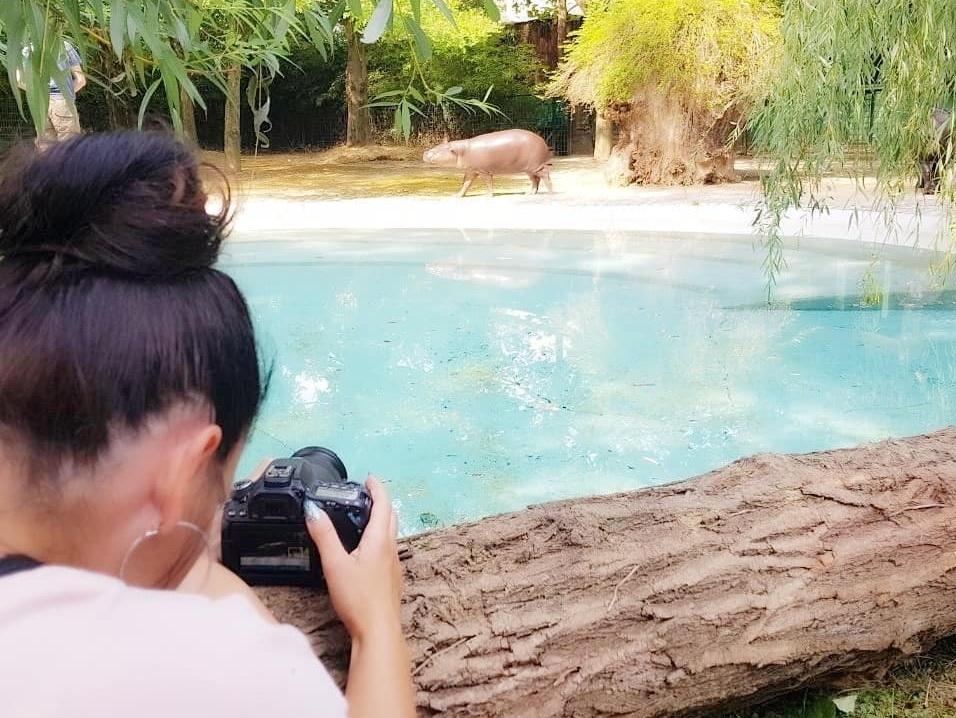 Divlje srce grada – dokumentarac pun ljubavi za životinje