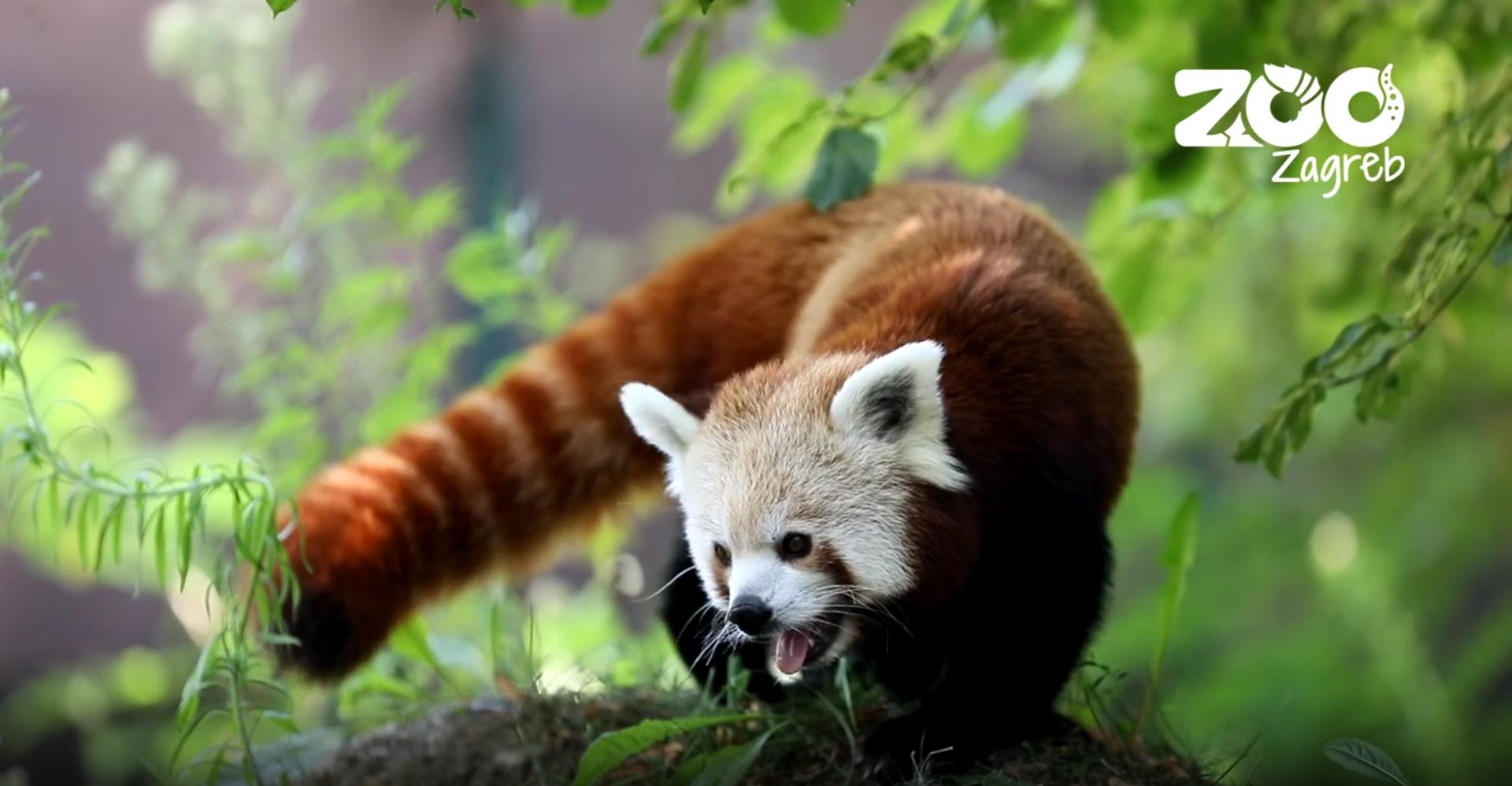 Panda Zoo Zagreb