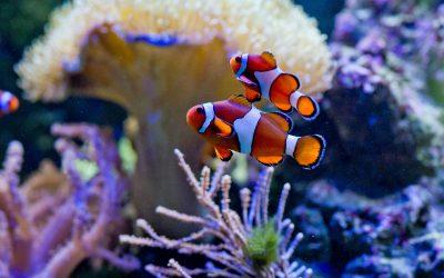 Dan divljih vrsta: Život pod vodom: za ljude i planet