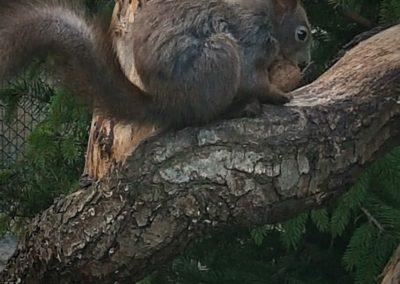 Puštanje vjeverica Zagreb Zoo (3)