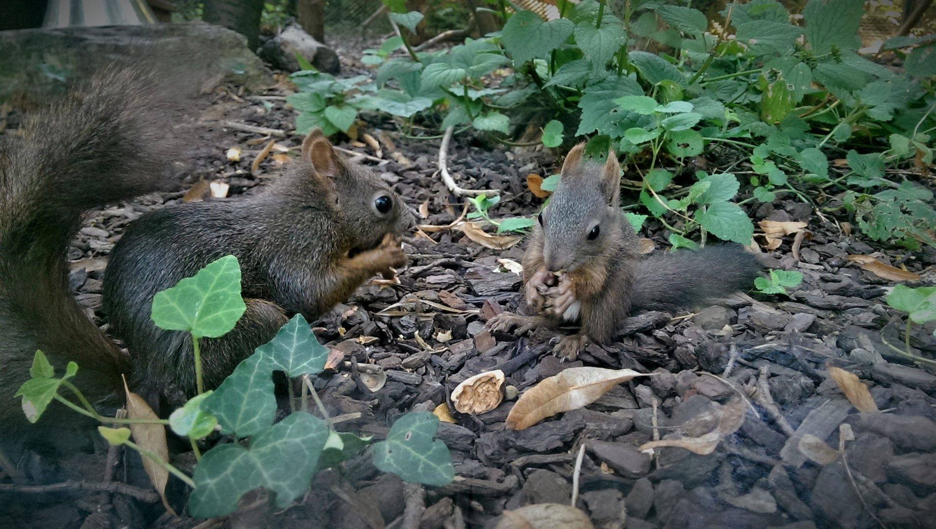 Naše vjeverice u šetnji čakovečkim Perivojem Zrinski