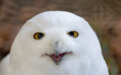Najdojmljivija ptica Maksimira je…