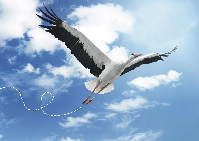 Vikend posvećen pticama