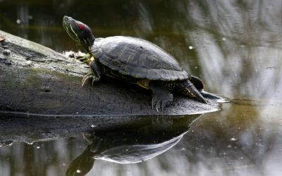 Doznajte sve o kornjačama