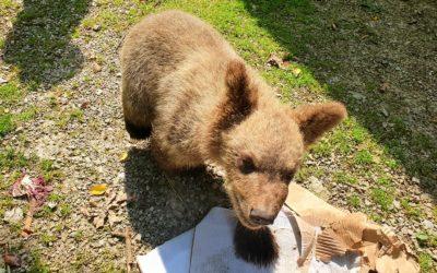 Medvjedić Matija obožava igre u vodi i novosti na jelovniku