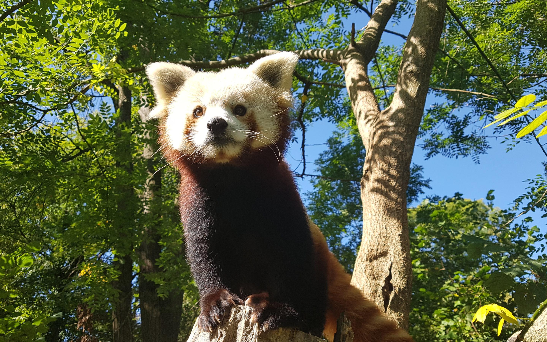 Međunarodni dan timaritelja i zaštite životinja