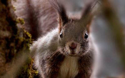 U Čakovec se doselile još dvije zagrebačke vjeverice