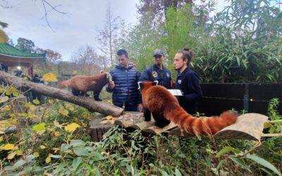Sinkovići objavili: Male crvene pande zvat će se Dudek i Regica