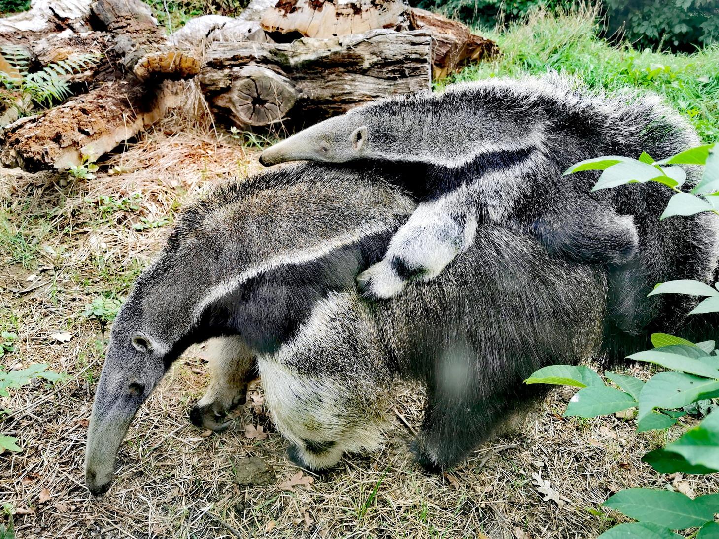 Plodna 2019. godina u Zoološkom vrtu grada Zagreba: na svijet stiglo čak tristo sisavaca, ptica, gmazova i vodozemaca