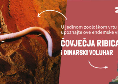 Covjecja_ribica_fbcover1 (1)