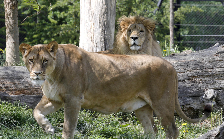 Zoološki se vrt otvara na Praznik rada
