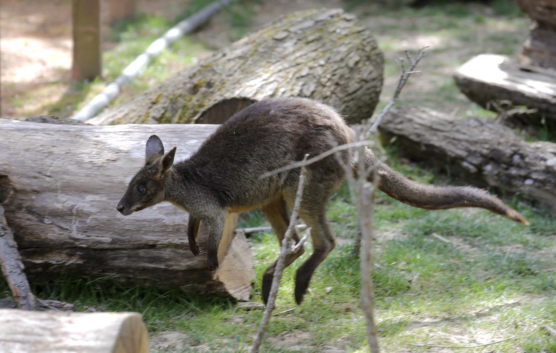 Virtualna Australija u Zoološkom vrtu grada Zagreba