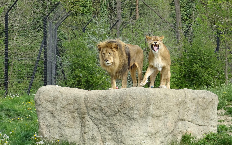 Stanovnici Zoološkog vrta počašćeni pisanicama