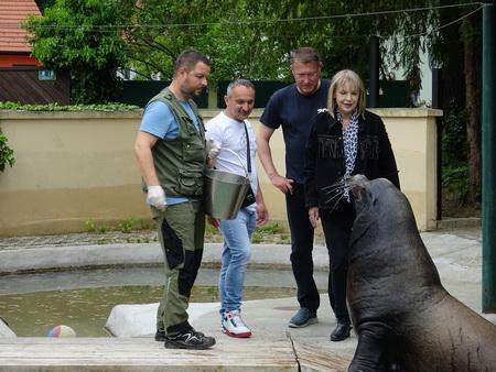 Hranjenje Morskih Lavova Zoo Zagreb
