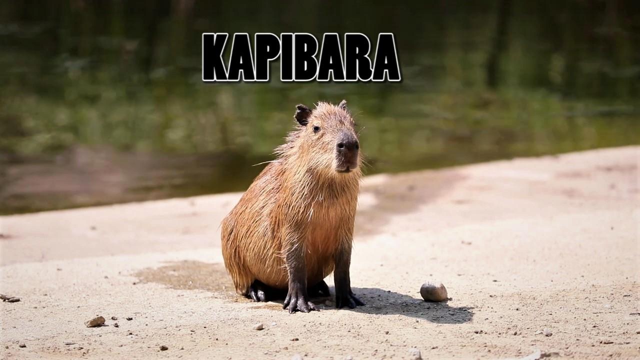 Edukativna priča: Kapibara