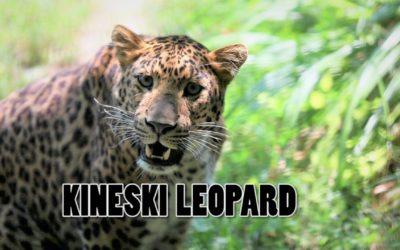 Edukativna priča: Kineski leopard