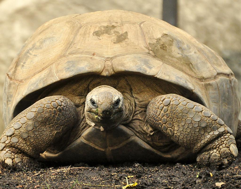 Svjetski je dan kornjača! 🐢🐢🐢