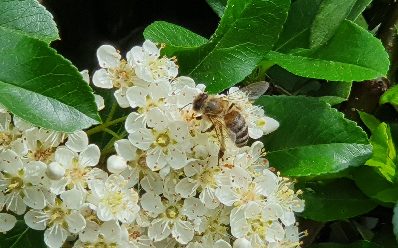Edukacija u povodu Svjetskog dana pčela: Od priče o vrijednim pčelama do predstavljanja slikovnice Pčele prijateljice