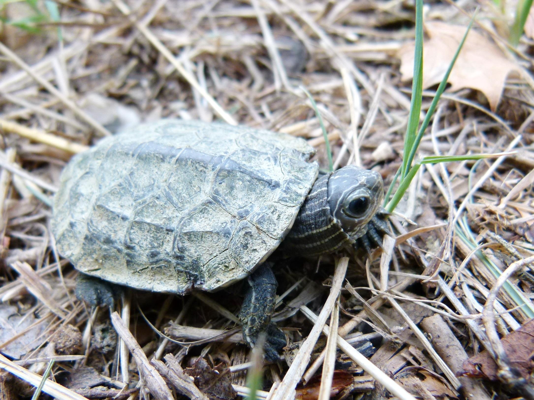 Svjetski dan kornjača