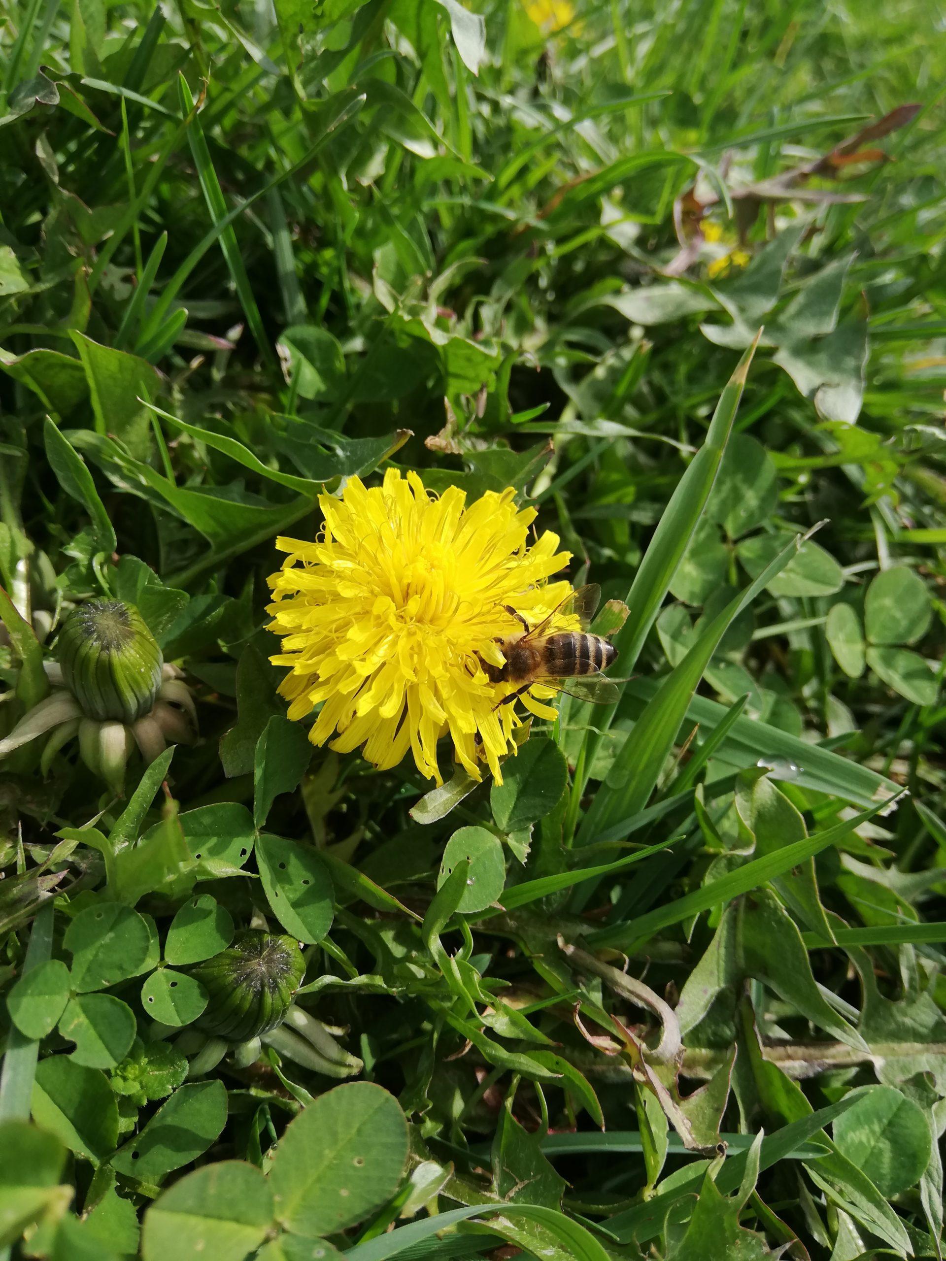 SVJETSKI DAN PČELA – ODGODA