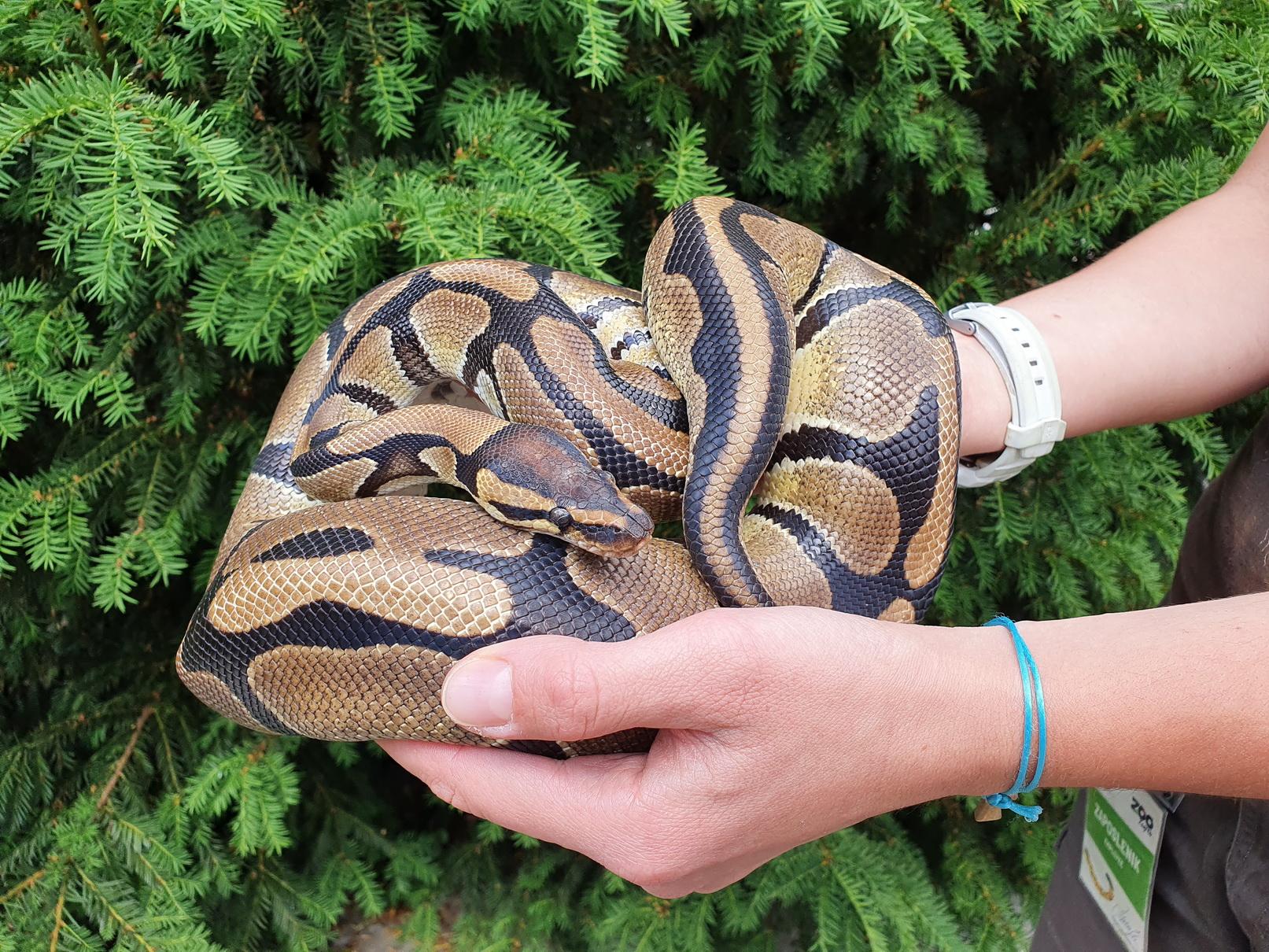 Subota sa zmijama