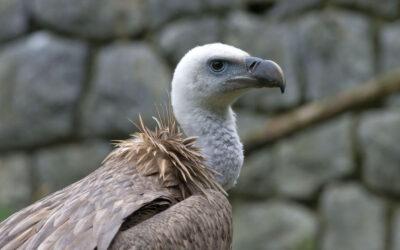 Međunarodni dan ptica strvinara