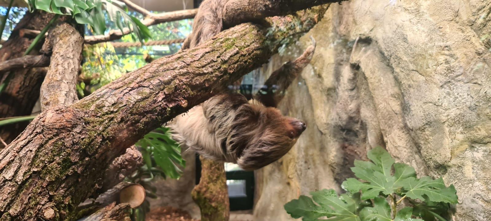 Par Ljenivaca Stigao U Divlje Srce Grada Zoo Zagreb