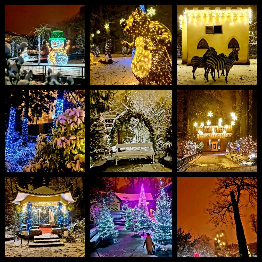 Polarni advent u Divljem srcu grada postao je još posebniji!