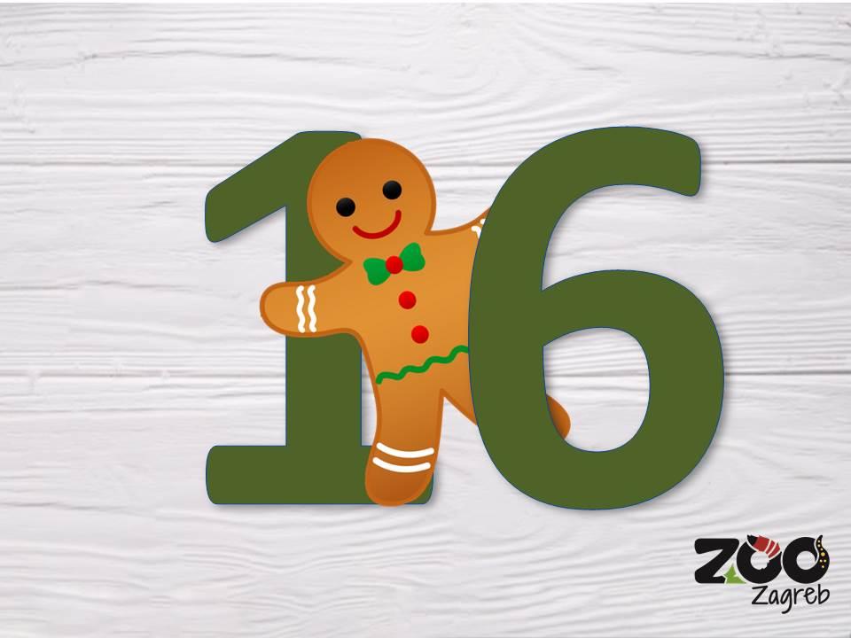 Zoo adventski kalendar: Zmija na penjalici