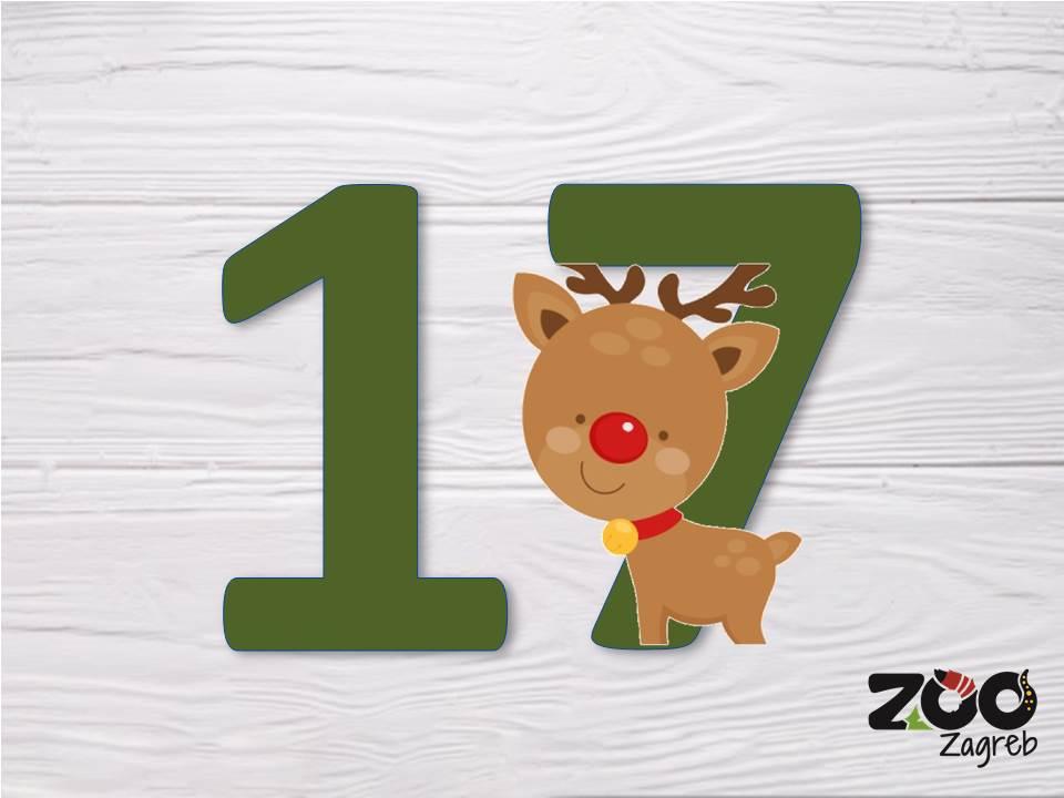 Zoo adventski kalendar: Degu istražuje kutiju papira