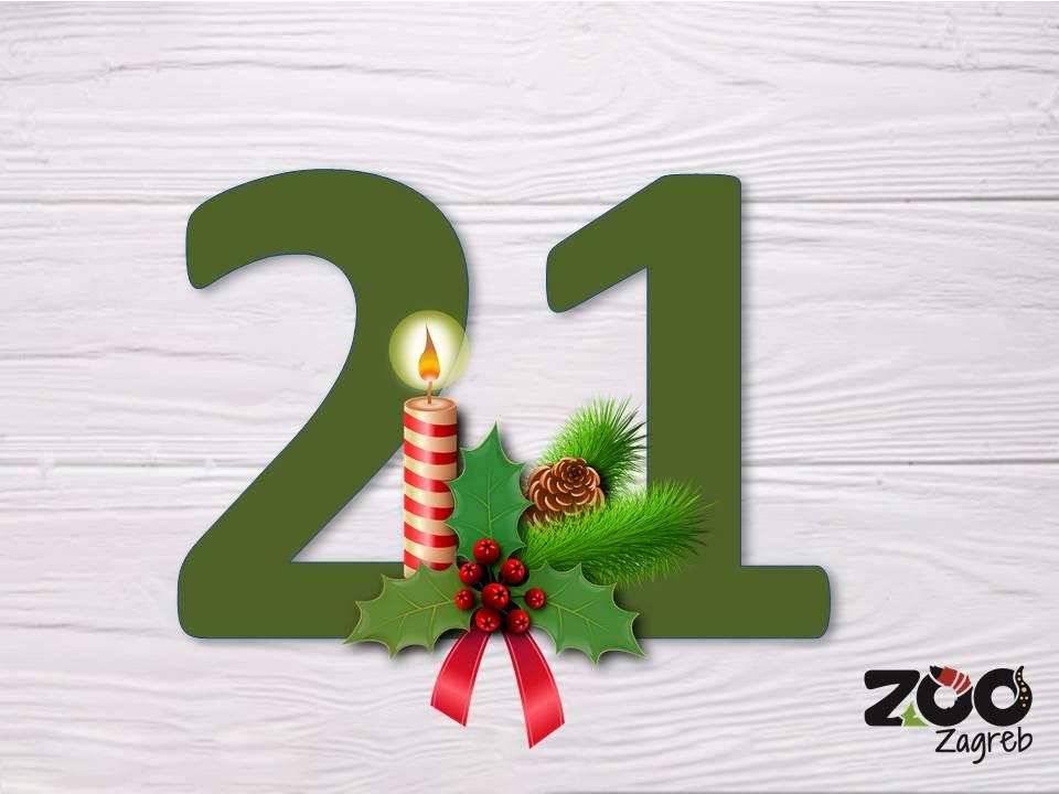 Zoo adventski kalendar: Agame u potrazi za hranom