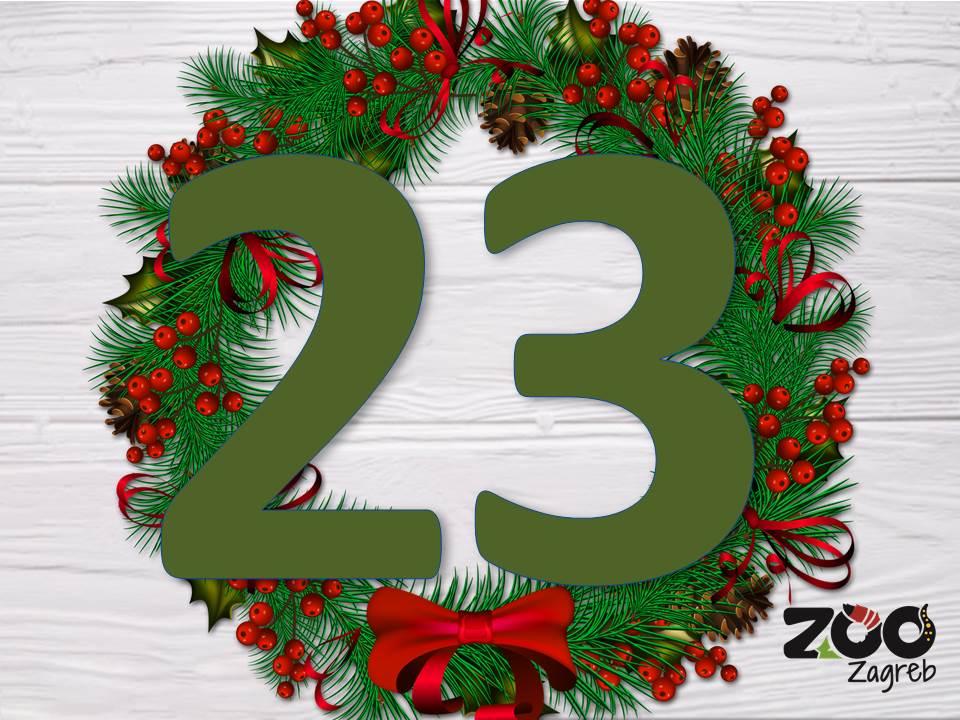 Zoo adventski kalendar: Bizonka i božićno drvce