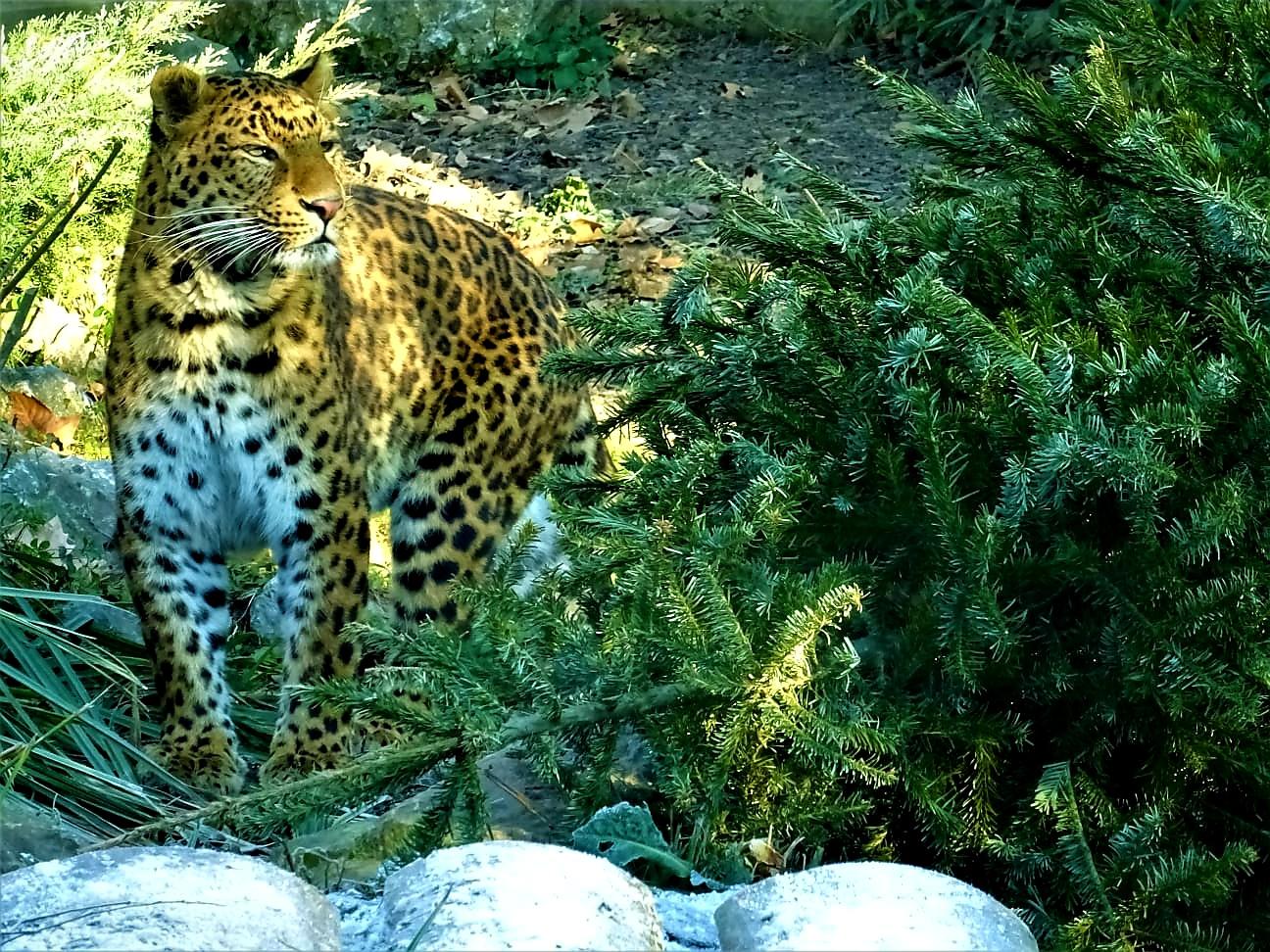 Podjela borova životinjama