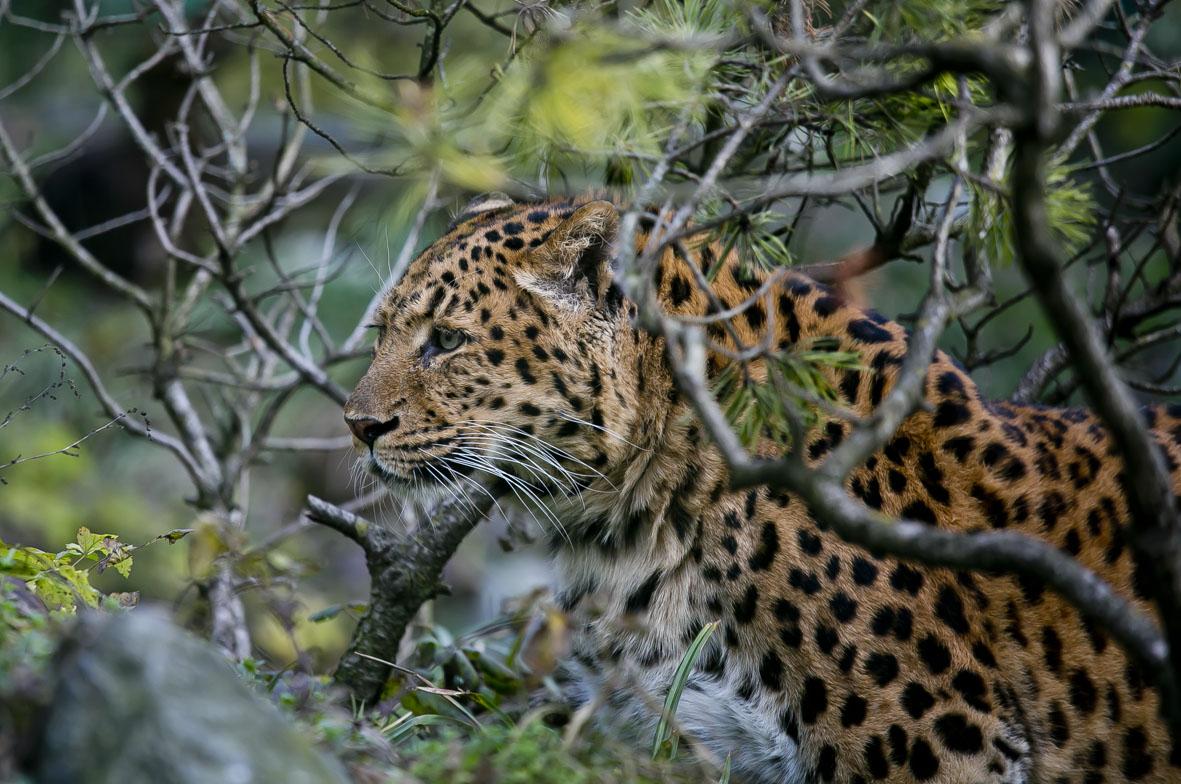 Egzotični vikend predstavlja životinjski svijet Azije