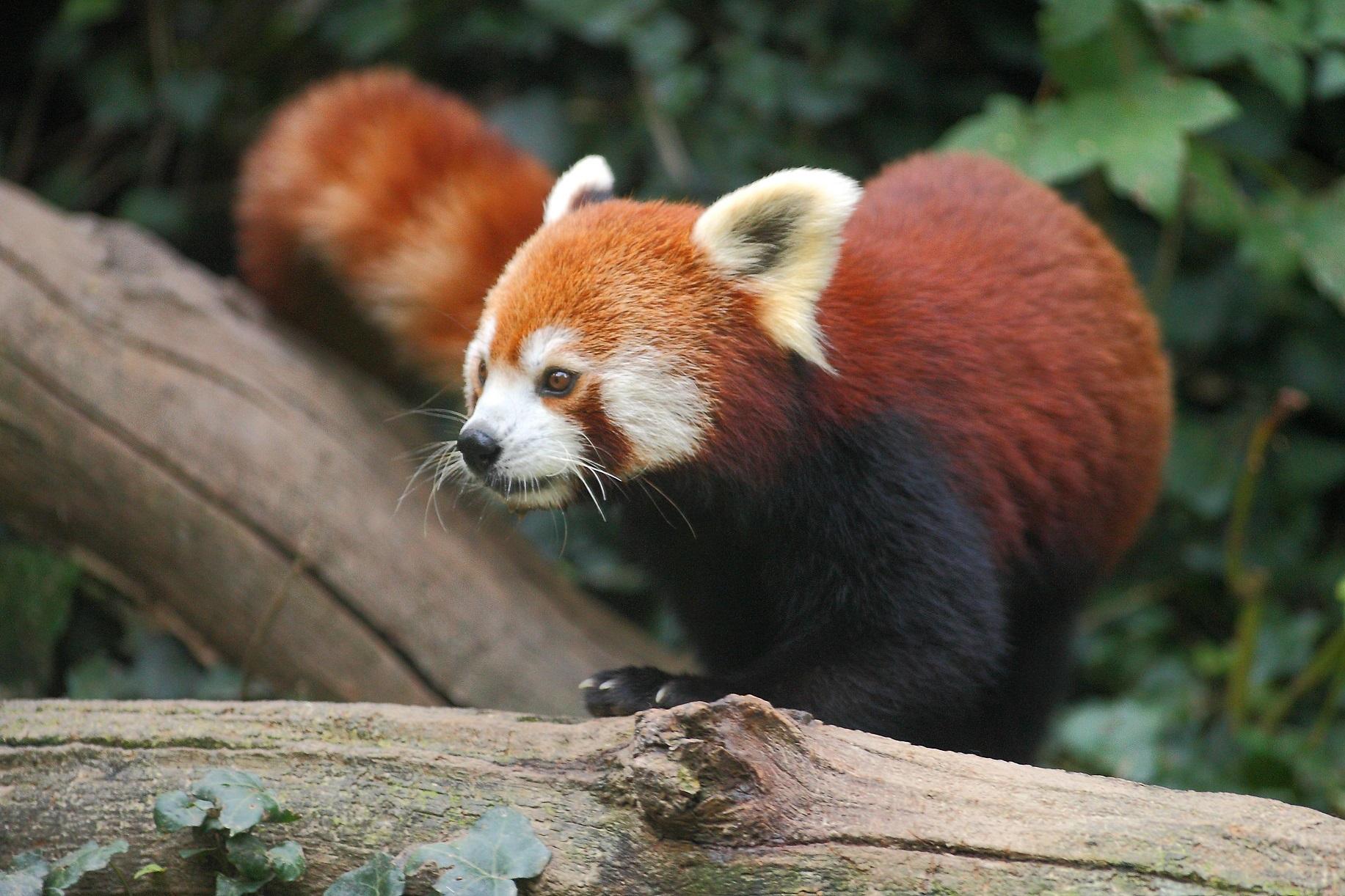 Svjetski dan divljih vrsta